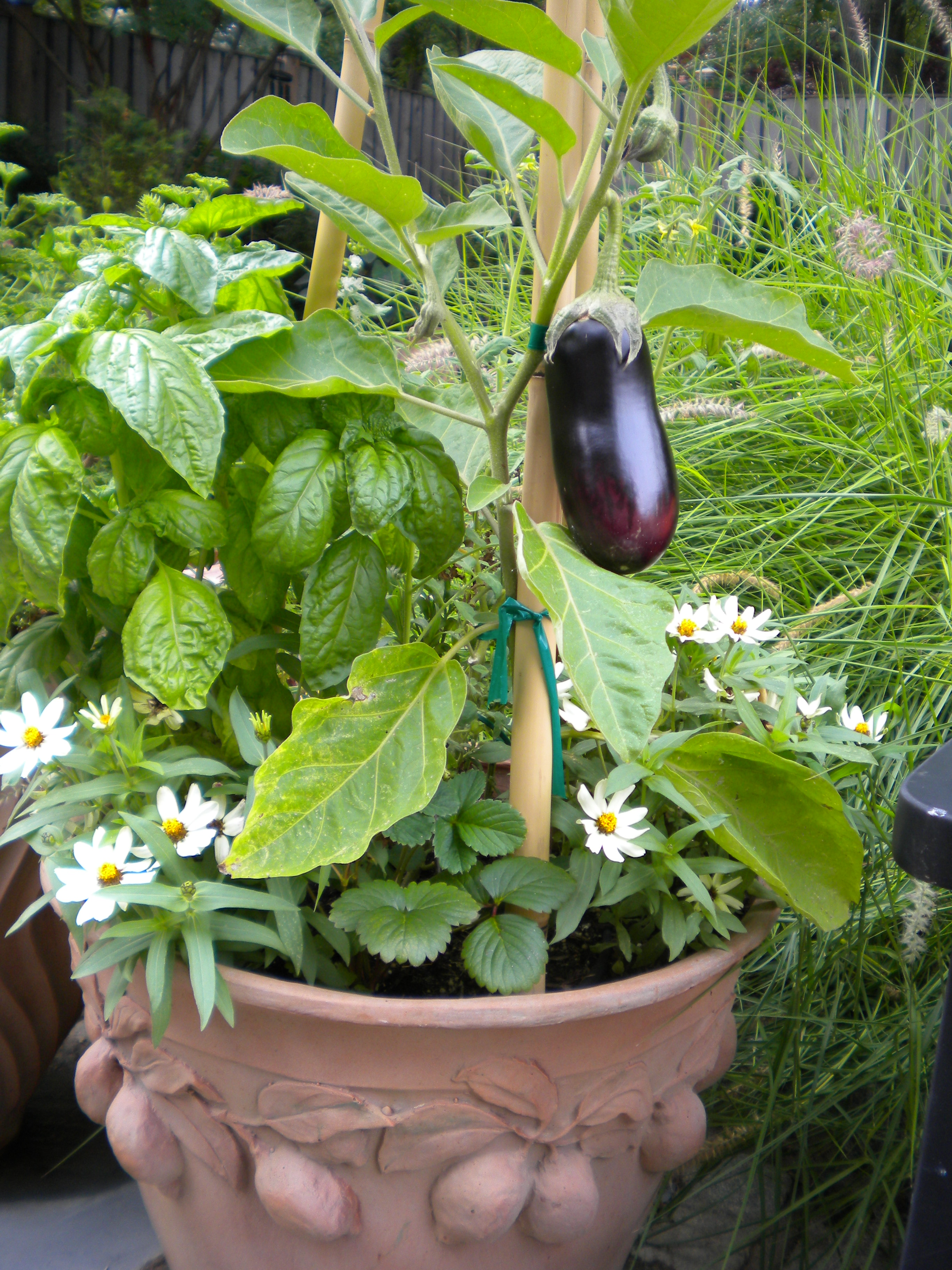 Plants For Kitchen Garden Container Gardens Gardenwise Blog