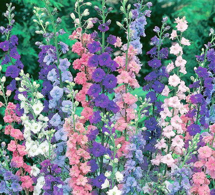 http://gardenwise.files.wordpress.com/2010/10/images_larkspur.jpg